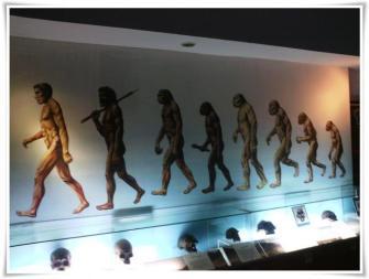 Evolusi-sangiran-1